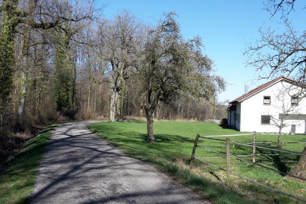 Haus Grün in Alleinlage am Wald