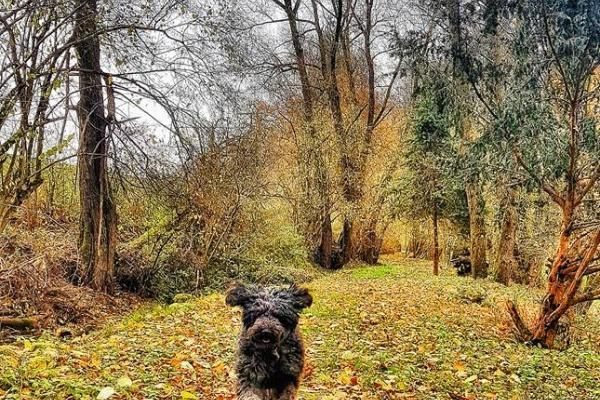 Gasthund im Herbst auf dem Privatweg