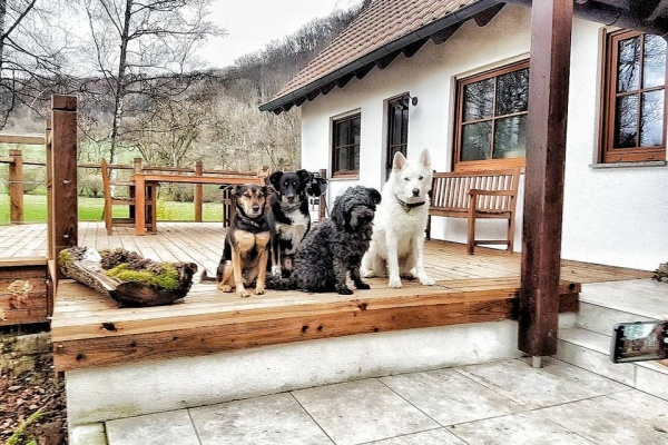 Bis zu 5 Hunde sind herzlich willkommen!