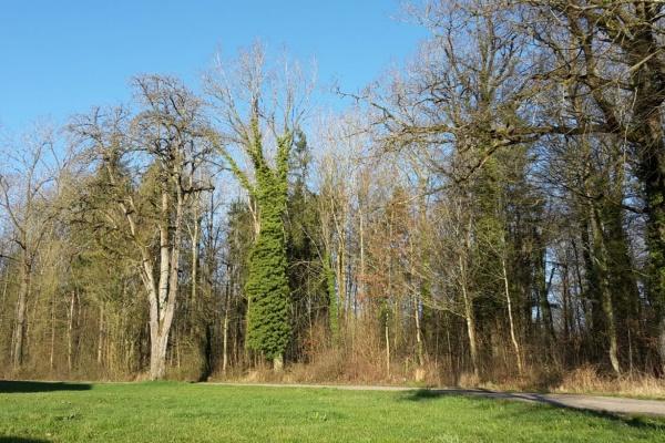 Gleich neben dem Haus beginnt der Wald