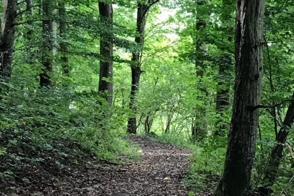 Abwechslungsreiche Terrain Spazierwege entlang des Flusses, im Tal und auch im Wald