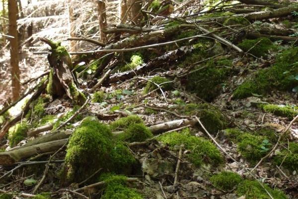 Moose, Farne, Natur pur