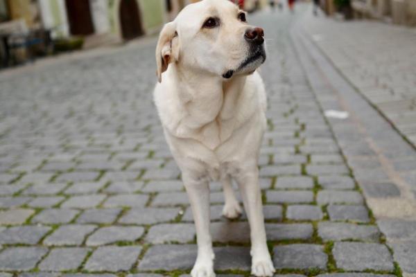 Ein Hund ist herzlich willkommen und kann einen eingezäunten Garten genießen