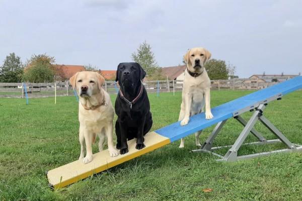 Traumhafte Gasthunde aus der Schweiz. Vielen Dank für dieses tolle Bild.