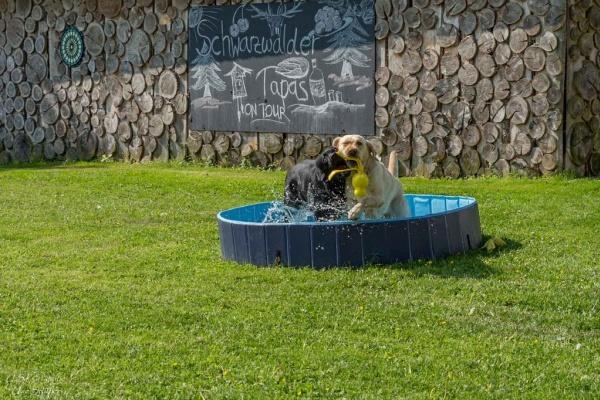 Ein Hundebecken steht bereit
