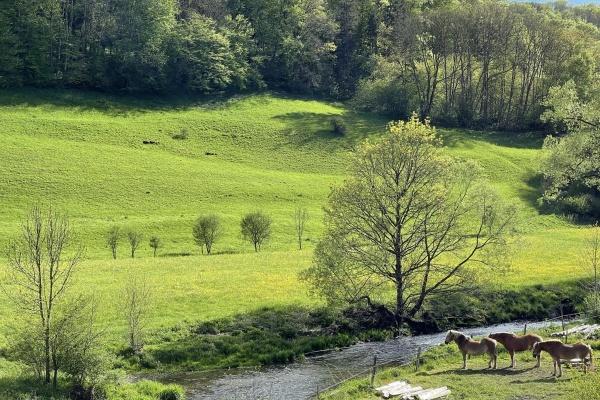 Am Flussufer weiden Pferde