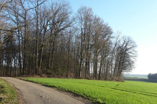 Wanderweg am Hof