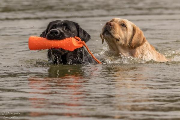 Hier kann auch Ihr Hund baden gehen. Bitte nehmen Sie Rücksicht auf Angler und andere Badegäste