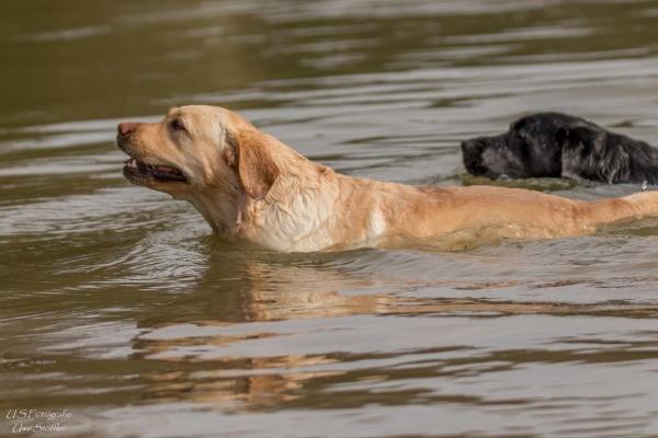 Hier kann auch Ihr Hund baden gehen..