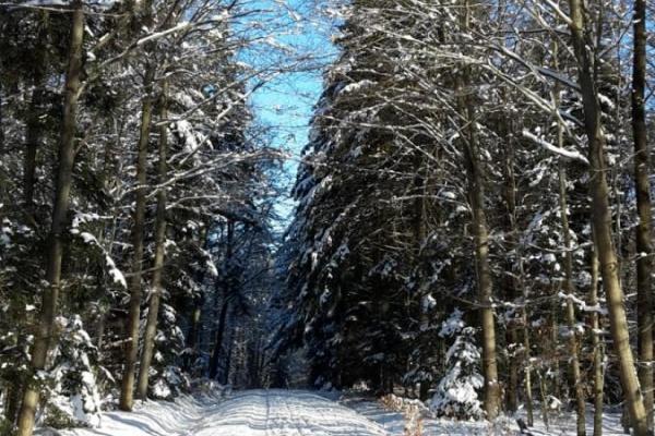 Winterwandern vor der Haustür